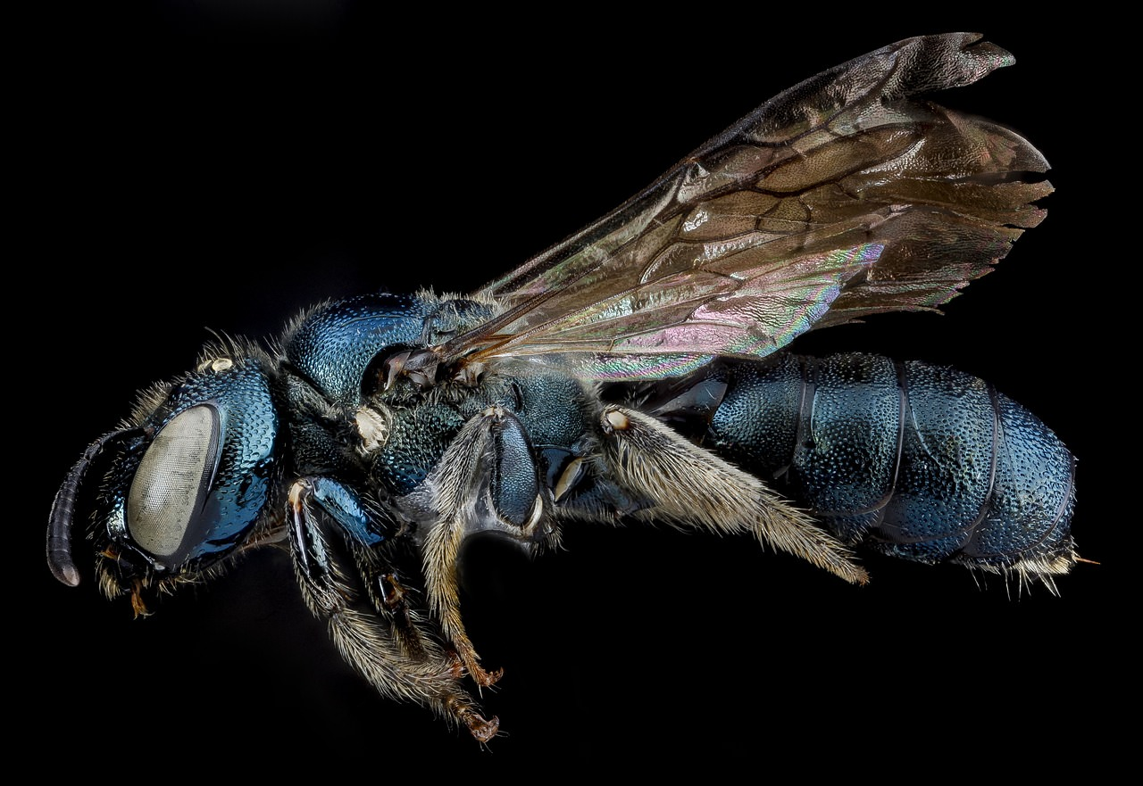how to kill carpenter bees instantly