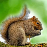 Squirrel Repellents Repellent Guide