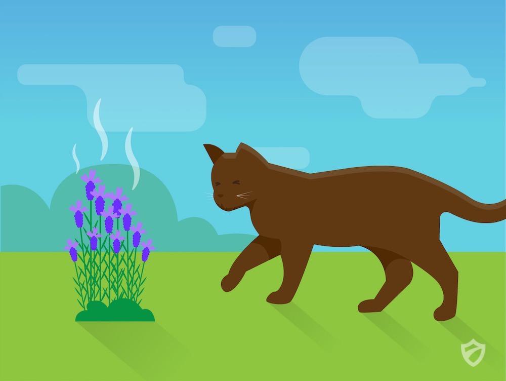 natural cat repellents cats repellent guide. Black Bedroom Furniture Sets. Home Design Ideas