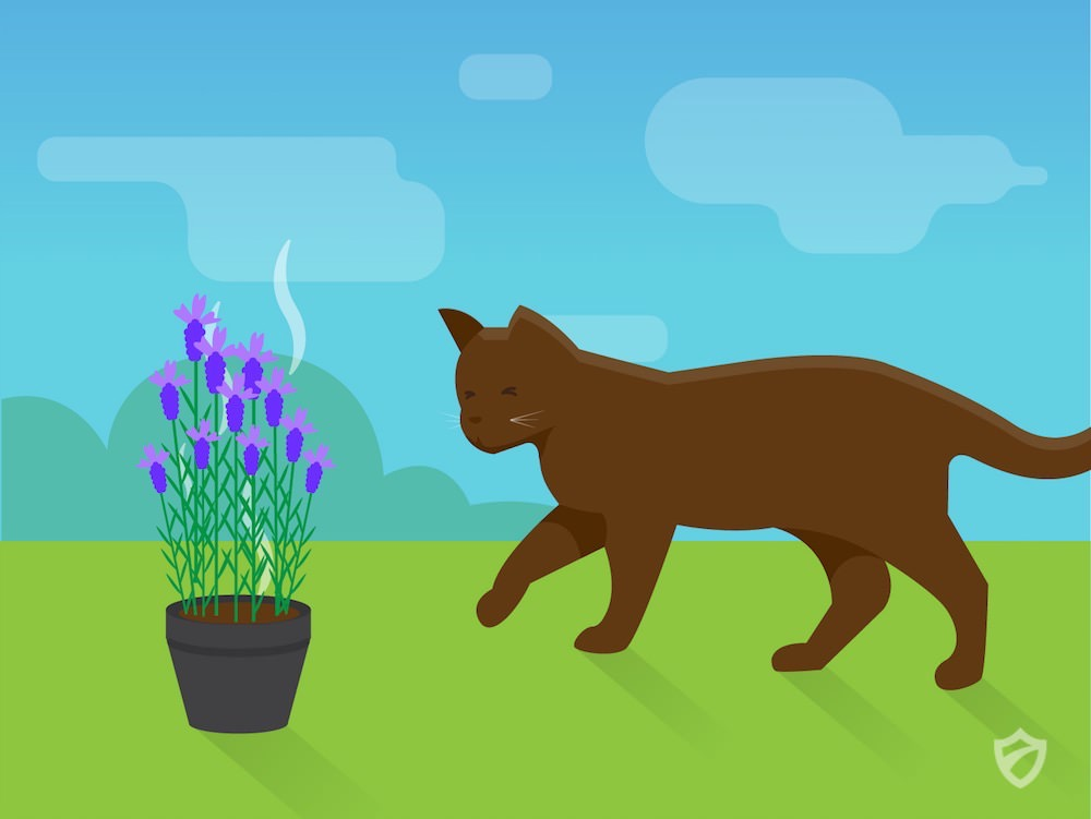 how to stop your own cats pooping in your garden