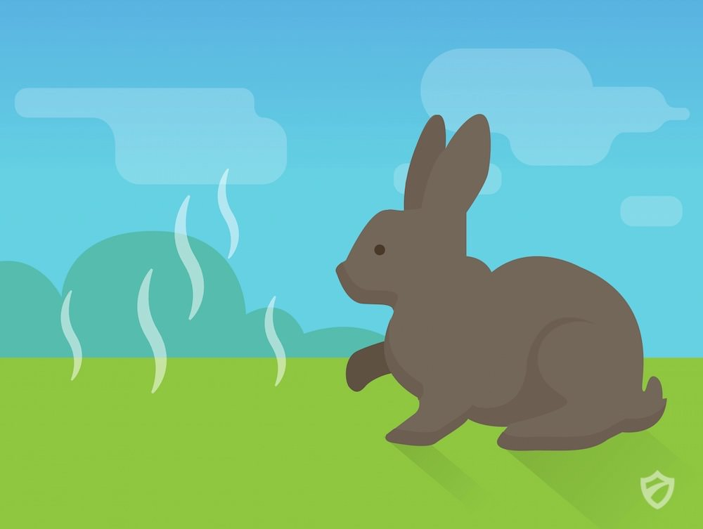 How To Get Rid Of Rabbits Rabbits Repellent Guide